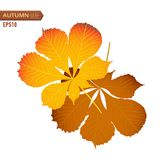 Autumn nut leaf isolated on a white background. Vector illustration Royalty Free Stock Photography