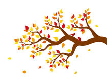 Vector illustration of autumn tree branch with colorful leaves. On white background Stock Photo