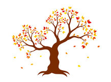 Vector illustration of autumn tree with yellow, red, orange leaves Royalty Free Stock Photography