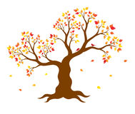 Vector illustration of autumn tree with yellow, red, orange leaves on white background. Stock Photos