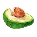 Vector illustration of avocado. Watercolor. EPS 8 Stock Photo