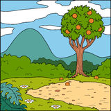 Vector illustration, background (glade and orange tree) Royalty Free Stock Images