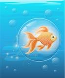 Vector illustration  on background Goldfish aquarium fish silhouette illustration. Colorful cartoon flat aquarium fish ico. N for your design Stock Photo