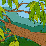 Vector illustration, background (tropical tree) Royalty Free Stock Image