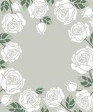 Background with white roses Royalty Free Stock Photos