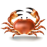 Vector illustration, badges, stickers, crab in realistic style. On white. Print, template, design element stock illustration