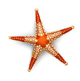 Vector illustration, badges, stickers, starfish in realistic style Stock Images