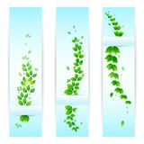 Fresh Ecological Banner. Vector illustration of banner with fresh green leaf Royalty Free Stock Image