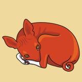 Vector Illustration of basenji dog Royalty Free Stock Photo