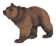 Vector illustration of a bear Royalty Free Stock Photos