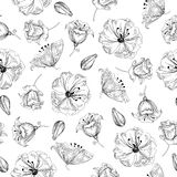 Vector illustration of beautiful flowers seamless pattern. Sketch. Royalty Free Stock Photo