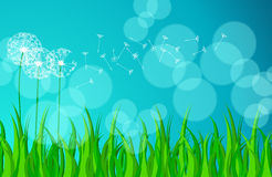 Beautiful green spring meadow Royalty Free Stock Photos