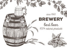 Vector illustration of beer. Raw material for brewing: branch hops and barley. Pub menu set. Royalty Free Stock Image