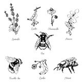 Vector set of bees and flowers. Vector illustration of bees and flowers honeyn, can be used for covers,banners,cards and any creative design royalty free illustration
