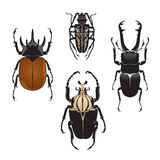Vector Illustration of Beetles Stock Photos