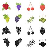 Vector design of berry and fruit logo. Set of berry and redberry  vector icon for stock. Vector illustration of berry and fruit icon. Collection of berry and royalty free illustration
