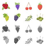 Vector illustration of berry and fruit logo. Set of berry and redberry  stock symbol for web. Isolated object of berry and fruit icon. Collection of berry and royalty free illustration
