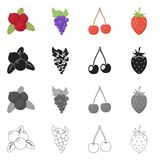 Vector illustration of berry and fruit symbol. Collection of berry and redberry  stock vector illustration. Isolated object of berry and fruit sign. Set of stock illustration