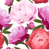 Vector illustration of big peonies flowers seamless pattern. Stock Photos