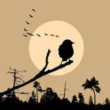 Vector illustration of the bird stock illustration