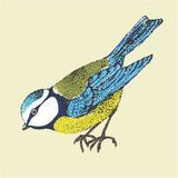 Vector illustration bird blue tit. Poultry side. graphic black and white Stock Images
