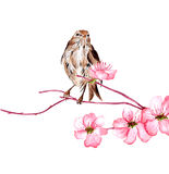 Vector illustration Bird on branch of sakura Royalty Free Stock Image