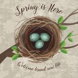 Vector illustration of bird`s nest with blue speckled eggs Stock Photo