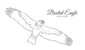 Vector illustration: Black sketch of Booted Eagle in fly on white background.  Stock Images