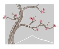Vector illustration - blooming sakura tree. Vector hand drawn illustration in line art style - blooming sakura tree in classic spring Japan landscape. Card Stock Image