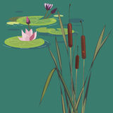 Blossoming lotuses on a bog Stock Photos