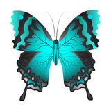 Vector illustration of a blue butterfly stock illustration