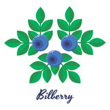 Vector illustration, blueberries, bilberry, blue forest berries Royalty Free Stock Image