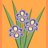 Vector illustration of bouquet of iris flowers. Royalty Free Stock Photo