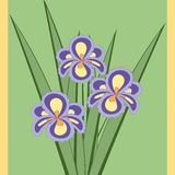 Vector illustration of bouquet of iris flowers. Stock Photos