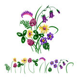 Vector illustration of bouquet made from wildflowers. Stock Photo