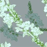 Vector illustration. A branch with flowers and buds. Seamless pattern.Antirrhinum. stock illustration