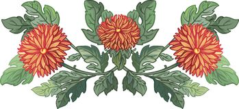 Vector illustration. bright  chrysanthemums Royalty Free Stock Photo