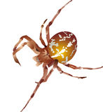 Vector illustration. Brown spider. Vector illustration, closeup brown spider without background Royalty Free Stock Images