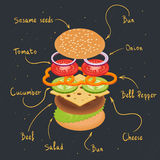 Vector illustration of burger infographics. Royalty Free Stock Photo