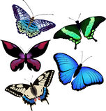 Vector illustration of butterflies Royalty Free Stock Photos