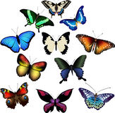 Vector illustration of butterflies Stock Image