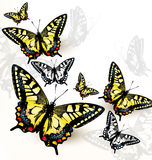Elegant fashion background with colorful butterflies Royalty Free Stock Image
