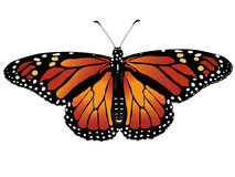 Vector illustration of butterfly. With orange wings Stock Photography