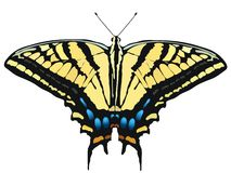 Vector illustration of butterfly Royalty Free Stock Photo