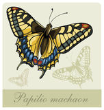 Vector illustration of a butterfly Swallowtail(Pap Stock Photo