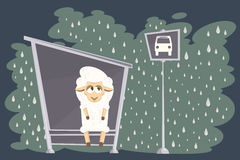 Vector illustration. Card with baby lamb waiting for the bus. Royalty Free Stock Photo