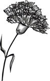 Vector illustration of Carnation Royalty Free Stock Images