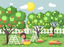 Vector illustration cartoon characters child brunette little girl harvest ripe fruit autumn orchard garden from plum Royalty Free Stock Photo