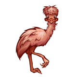 Vector illustration of cartoon cute emu Stock Images