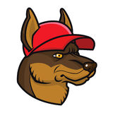 Vector illustration cartoon dog in cap. Sports mascot character face Royalty Free Stock Images